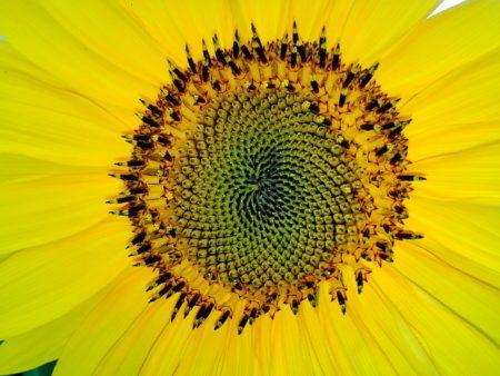 fibonacci-1599007_640